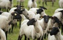 Avininkystė: plėtros galimybės Lietuvoje ir Baltarusijoje