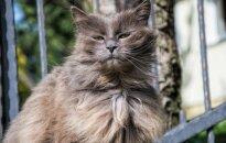 Čantilio katė