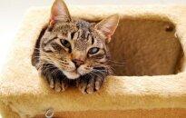 Kamuoja prasta nuotaika? Jums reikia katino Berklio!