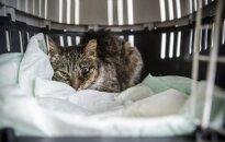 Neįtikėtinas žiaurumo išpuolis Viršuliškėse: vyras sviedė beglobę katę į sieną!