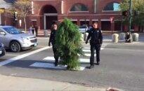 Meine sulaikytas eismą blokavęs žmogus-medis