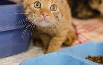 Išvengę mirties gatvėje, katinėliai ieško tikrų šeimininkų: Alvinas ir Dilara!