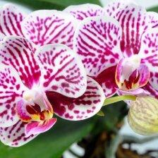 Specialistų patarimai, kaip žiemą prižiūrėti orchidėjas