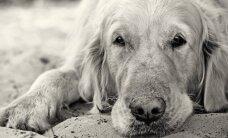 Šiaulių rajone išgelbėtas skęstantis šuo