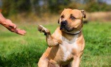 Gyvūnų globa: nuskriaustųjų sėkmės istorijos