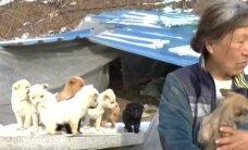 Moteris išgelbėjo 200 šuniukų, kurie galėjo būti suvalgyti