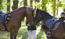 Svarbu į arklius ne tik pasižiūrėti, bet ir tinkamai juos prižiūrėti