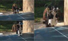 Iš jo galėtų pasimokyti daugelis: šuo žaidžia stalo tenisą