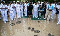 Tailando karaliaus gimtadienio proga paleisti 1066 vėžliai