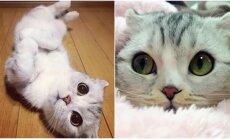 Nepaprastos katinėlio akys