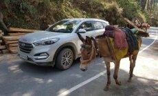 Vairavimas Indijoje – rimtas iššūkis