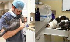 Veterinarijos klinika Airijoje ieško kačių glostytojo