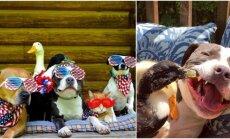 Gyvūnai tapo geriausiais draugais
