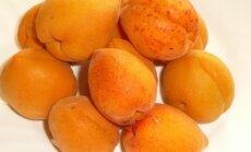 Medelynų specialistų patarimai, kaip užsiauginti abrikosų