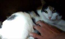Skaidiškėse rasta trispalvė katytė