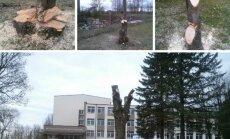 Teritorijoje prie Jono Žemaičio gimnazijos pasidarbuota iš peties - iš medžių likę vaiduokliai