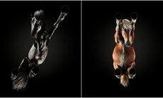 Arklių nuotraukos, darytos iš apačios
