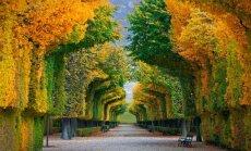 Kur nuvykti ir ką nuveikti savaitgalį: 4 dėmesio vertos kryptys šį rudenį
