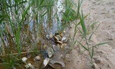 Moliuskai Varėnos tvenkinyje