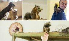 Voverė vilniečių namuose