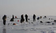 Poledinė stintų žvejyba