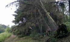 Kaune vėtra vartė medžius