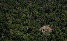 Aplinkosaugos pareigūnas ant nelegaliai nukirstų medžių rietuvės (Amazonės miškai, Brazilija)