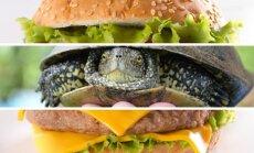 Vėžlys mėsainyje / Shutterstock nuotr.