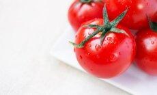 Viskas apie pomidorų sėją ir daigų auginimą