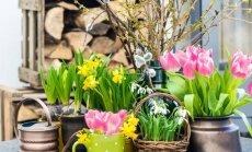 Naujausios šio pavasario dizaino tendencijos