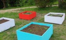 Daržininkystė kitaip: kaip lysves paversti sodybos ar terasos puošmena?