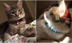 Katinų terapija