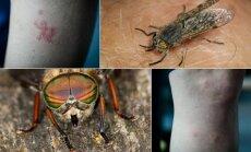 vabzdžiai, gyliai, sparvos, įkandimai