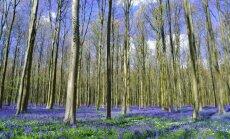 Miškas Belgijoje