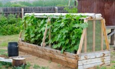 Šiltlysvės – būdas džiaugtis ankstyvu žalumynų derliumi
