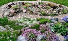 Augalai sodinami didesniais ploteliais
