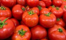 Gausaus pomidorų derliaus paslaptys