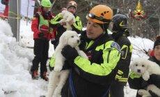 Italijos gelbėtojai lavinos palaidotame viešbutyje rado tris gyvus šuniukus