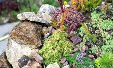 Alpinariumo puoselėjimas: kokius augalus jame auginti