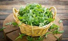 Lapinių salotų konkurentės gražgarstės – kaip užauginti kvapniuosius lapelius