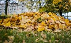 Rudeniniai lapai: kaip nuo jų apsivalyti