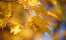 Sodas ir daržas rudenį: kovos priemonės su kenkėjais