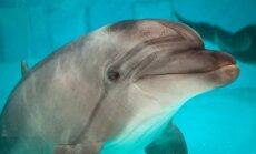 Vieno eksperimento metu mokslininkė santykiavo su delfinu