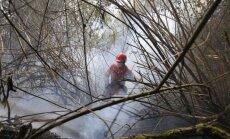 Eukaliptų giraitės gaisras netoli Bogotos (Asociatyvi nuotr.)