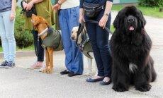 Terapiniai šunys svečiavosi SOS vaikų kaime