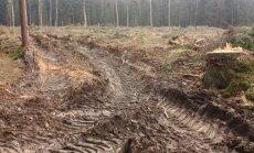 Valstybinei miškų tarnybai norima suteikti teisę ginti viešąjį interesą