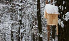 8 sumanymai, kuo lesinti žiemoti likusius paukščius
