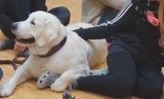 Vilniuje vyko šunų terapija