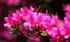 Augalai Vakarų Lietuvoje: ką geriausia auginti