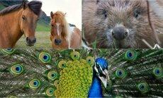 Senovėje valgyti gyvūnai